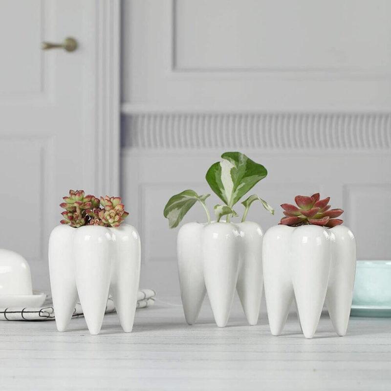 Vases en forme de dent