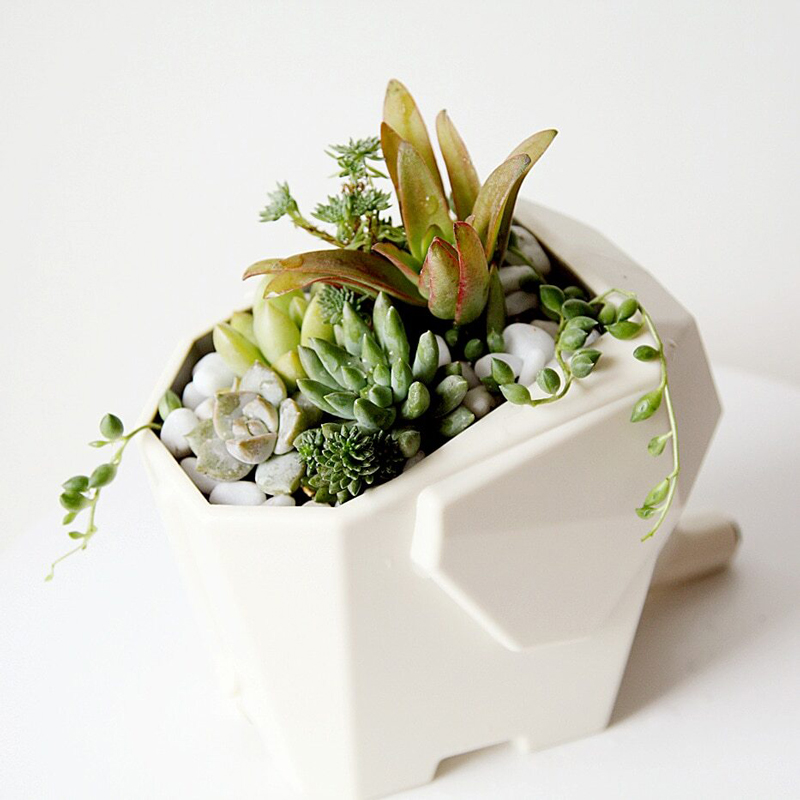 égoutoir éléphant blanc avec plante