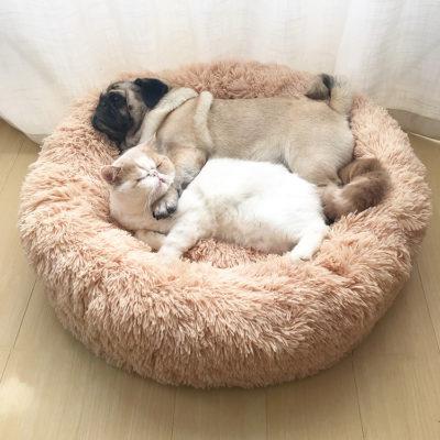 Chat et chien qui dorment ensemble