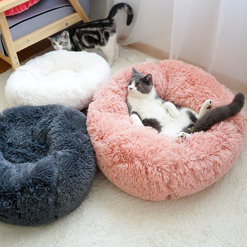 Chats sur des coussins