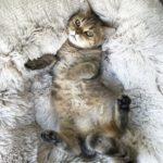 chaton mignon sur coussin gris