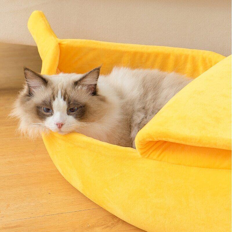 Chat dans le lit coussin banane
